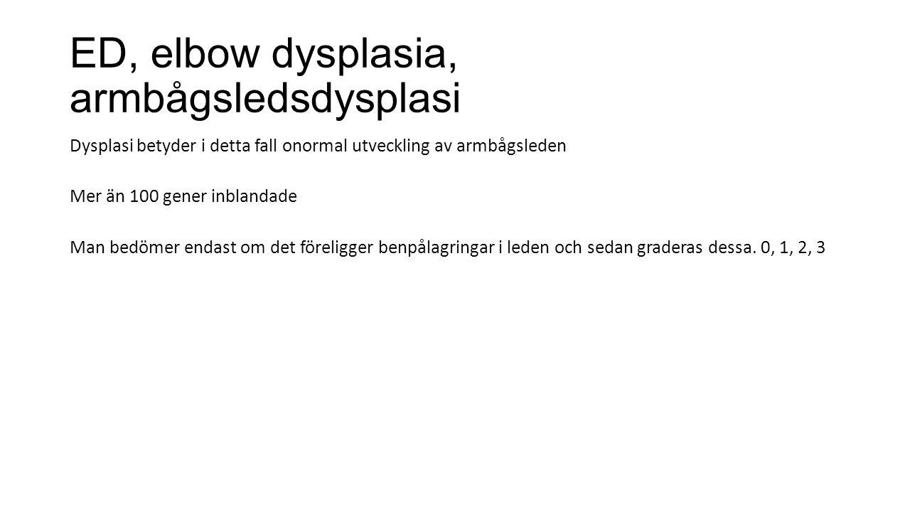 ED, elbow dysplasia, armbågsledsdysplasi Dysplasi betyder i detta fall onormal utveckling av armbågsleden Mer än 100 gener inblandade Man bedömer enda
