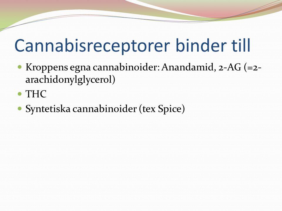 Cannabisreceptorer binder till Kroppens egna cannabinoider: Anandamid, 2-AG (=2- arachidonylglycerol) THC Syntetiska cannabinoider (tex Spice)