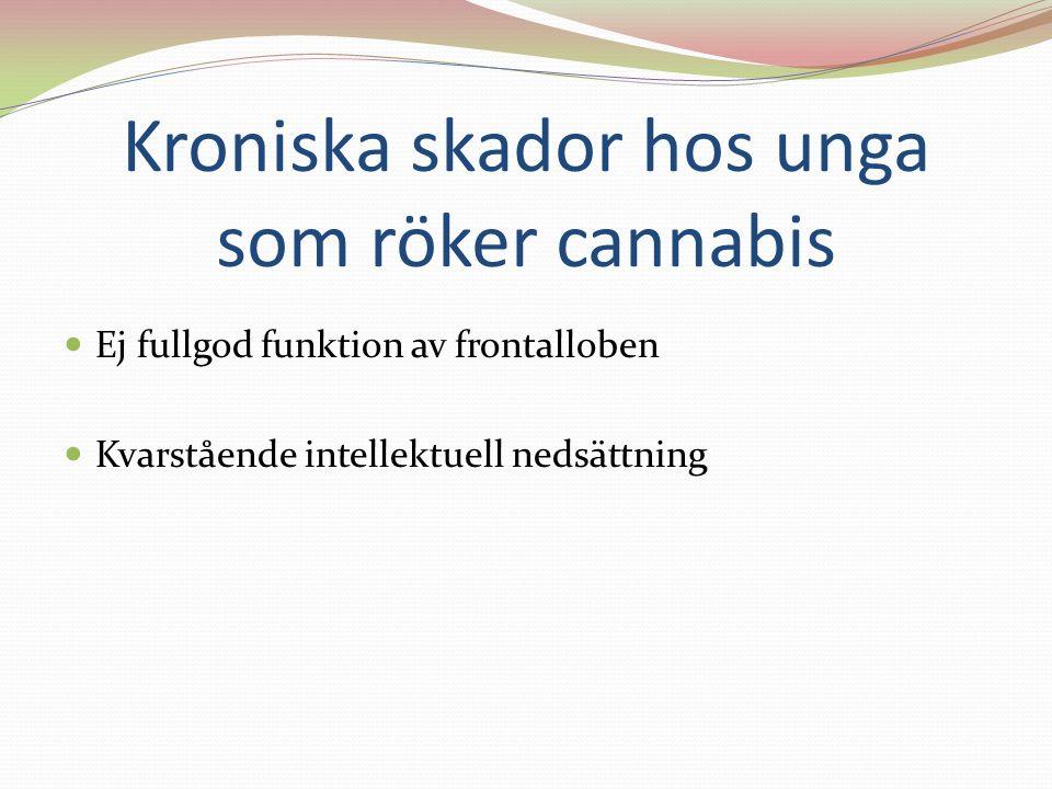 Kroniska skador hos unga som röker cannabis Ej fullgod funktion av frontalloben Kvarstående intellektuell nedsättning