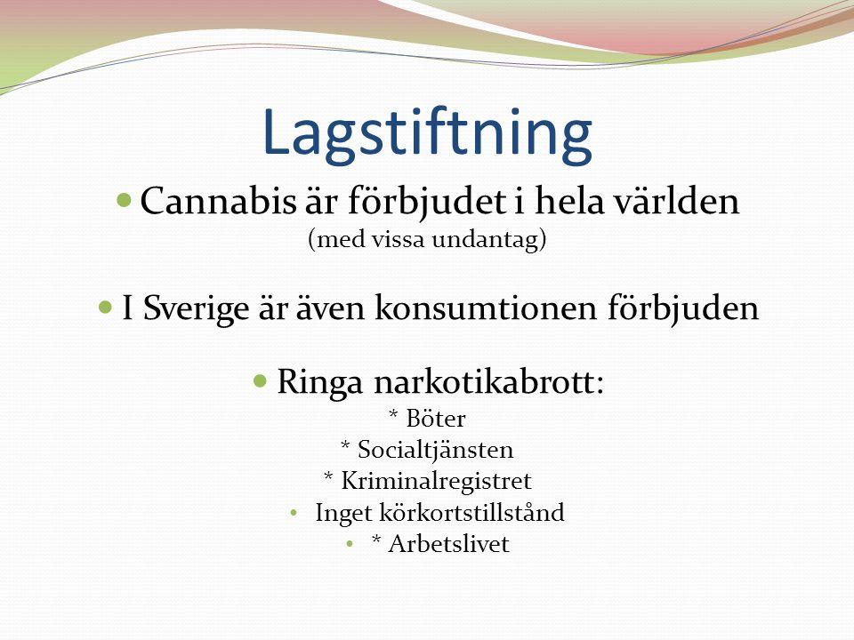 Lagstiftning Cannabis är förbjudet i hela världen (med vissa undantag) I Sverige är även konsumtionen förbjuden Ringa narkotikabrott: * Böter * Socialtjänsten * Kriminalregistret Inget körkortstillstånd * Arbetslivet