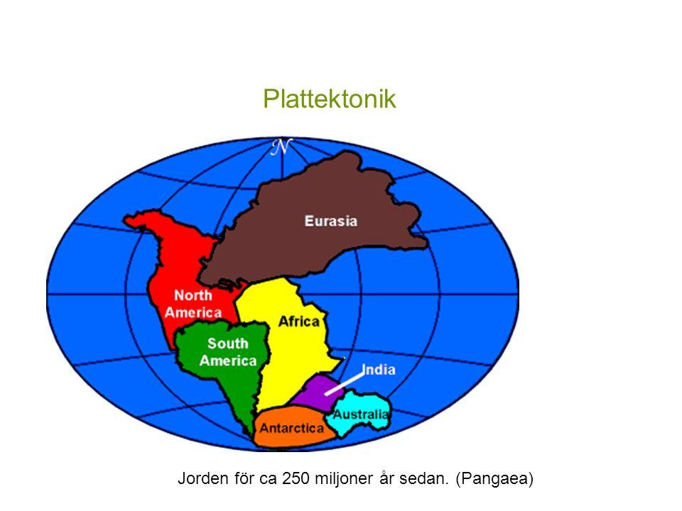 Plattektonik Jorden för ca 250 miljoner år sedan. (Pangaea)