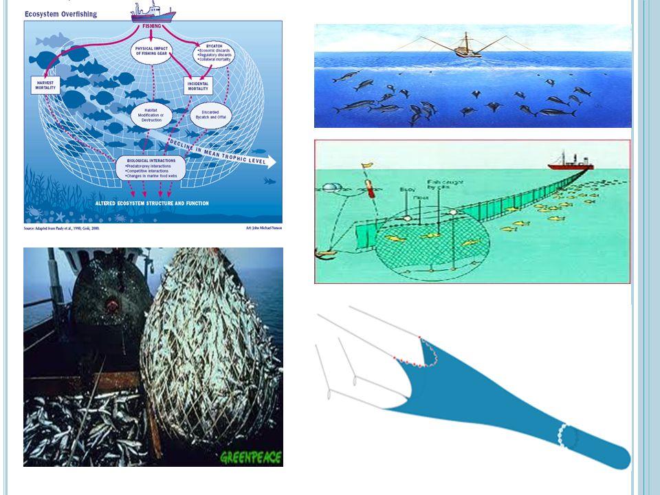 Efterfrågan/intervening opportunity/överfiske Väginvestering Transportkostnad, tillförlitlighet, lastkapacitet Garanterade leveranser till fiskagenter i Manila Tillgång till kapital (lättare/billigare) Investeringar (båtar/ fordon/utrustning/is) Tryck på resurser: befolkning, båtar, utrustning Ökad produktion, syssel- sättning, konkurrens, inkomster Resursuttömning Kustfiske: Ja.