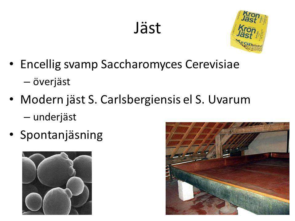 Jäst Encellig svamp Saccharomyces Cerevisiae – överjäst Modern jäst S.