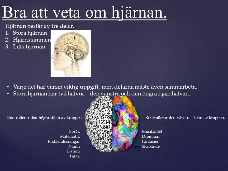 Bra att veta om hjärnan.Lilla hjärnan sköter alla våra rörelser som att gå och hoppa.