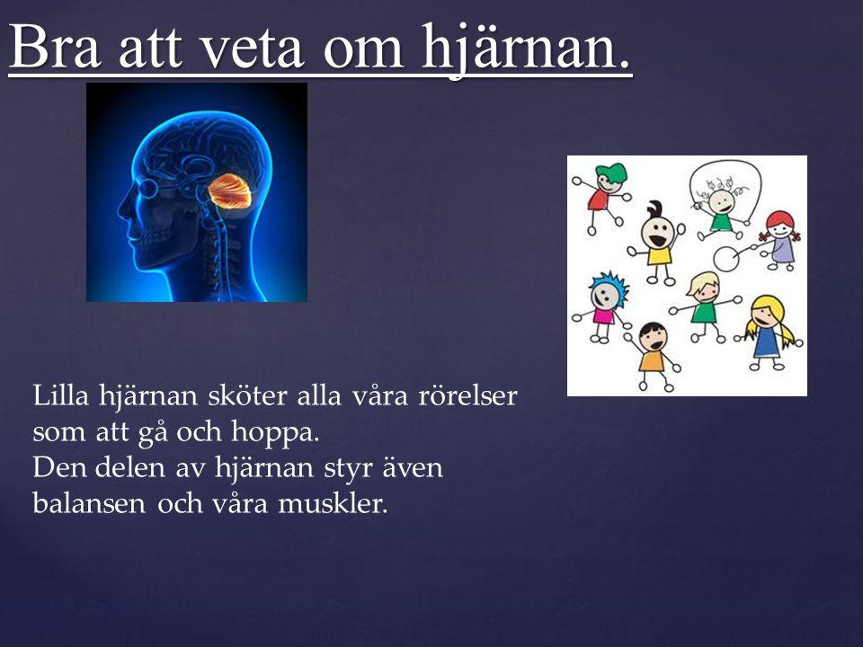 Bra att veta om hjärnan.Hjärnstammen gör så att hjärnan får kontakt med ryggmärgen.