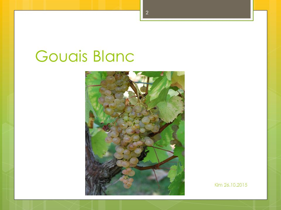 Gouais Blanc Kim 26.10.2015 2