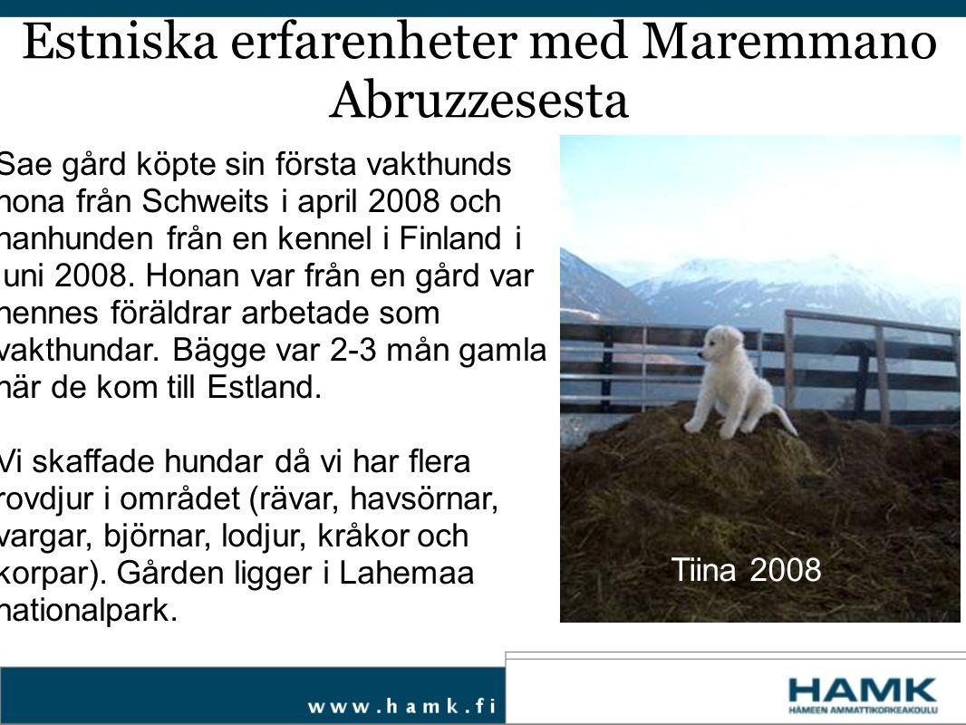 Sae gård köpte sin första vakthunds hona från Schweits i april 2008 och hanhunden från en kennel i Finland i juni 2008. Honan var från en gård var hen