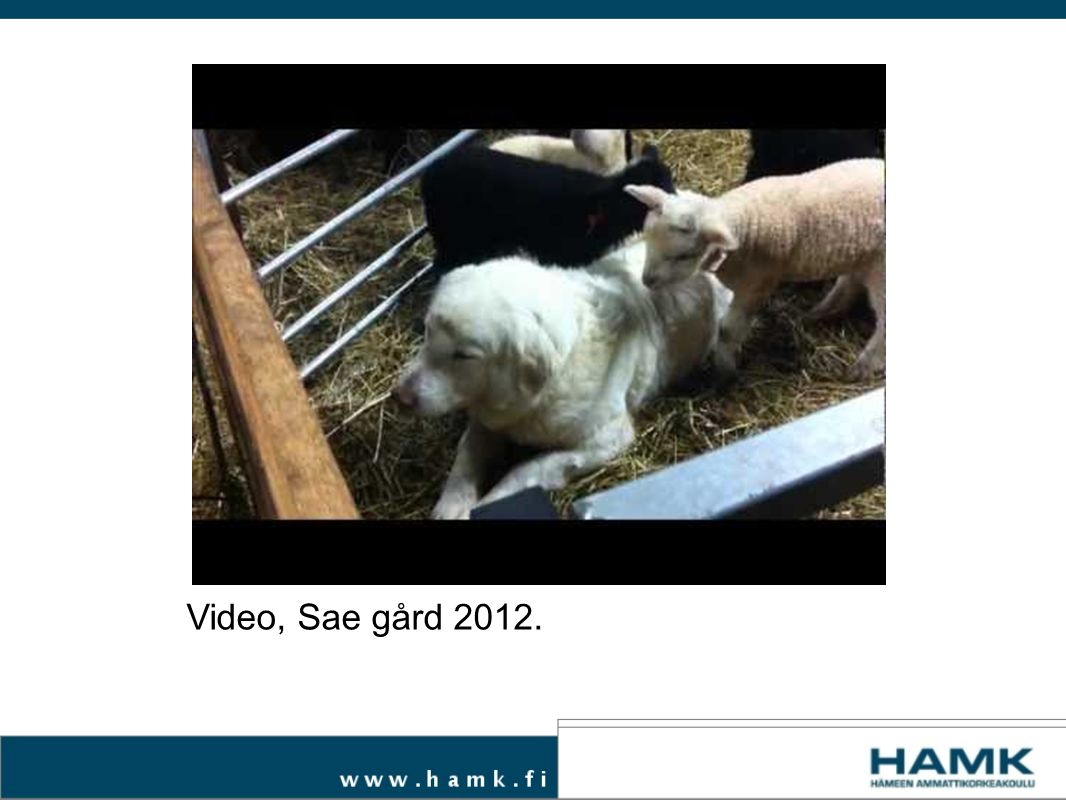Video, Sae gård 2012.