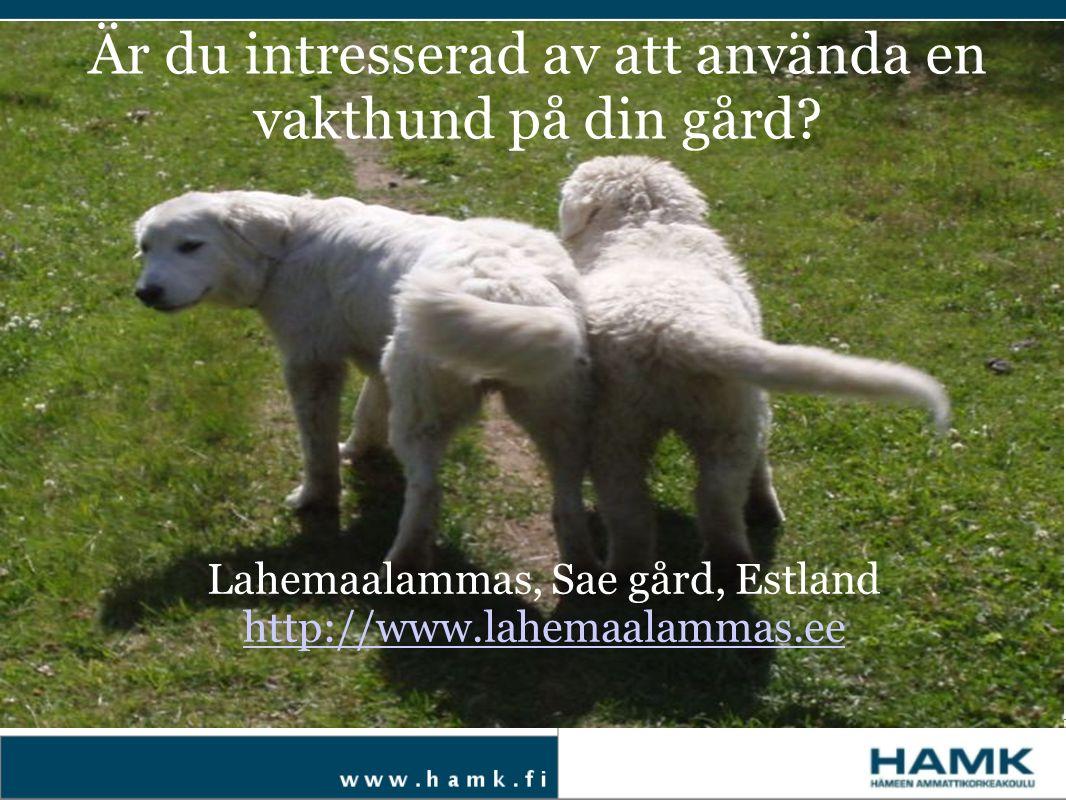 Är du intresserad av att använda en vakthund på din gård? Lahemaalammas, Sae gård, Estland http://www.lahemaalammas.ee
