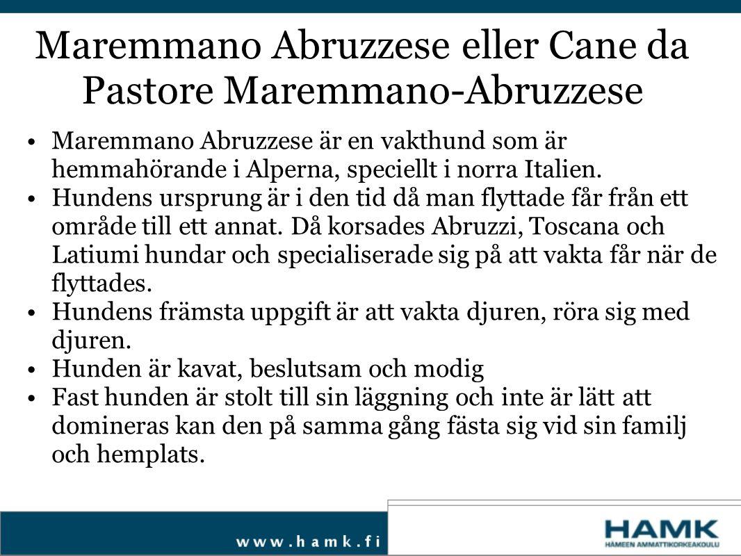 Maremmano Abruzzese är en vakthund som är hemmahörande i Alperna, speciellt i norra Italien. Hundens ursprung är i den tid då man flyttade får från et