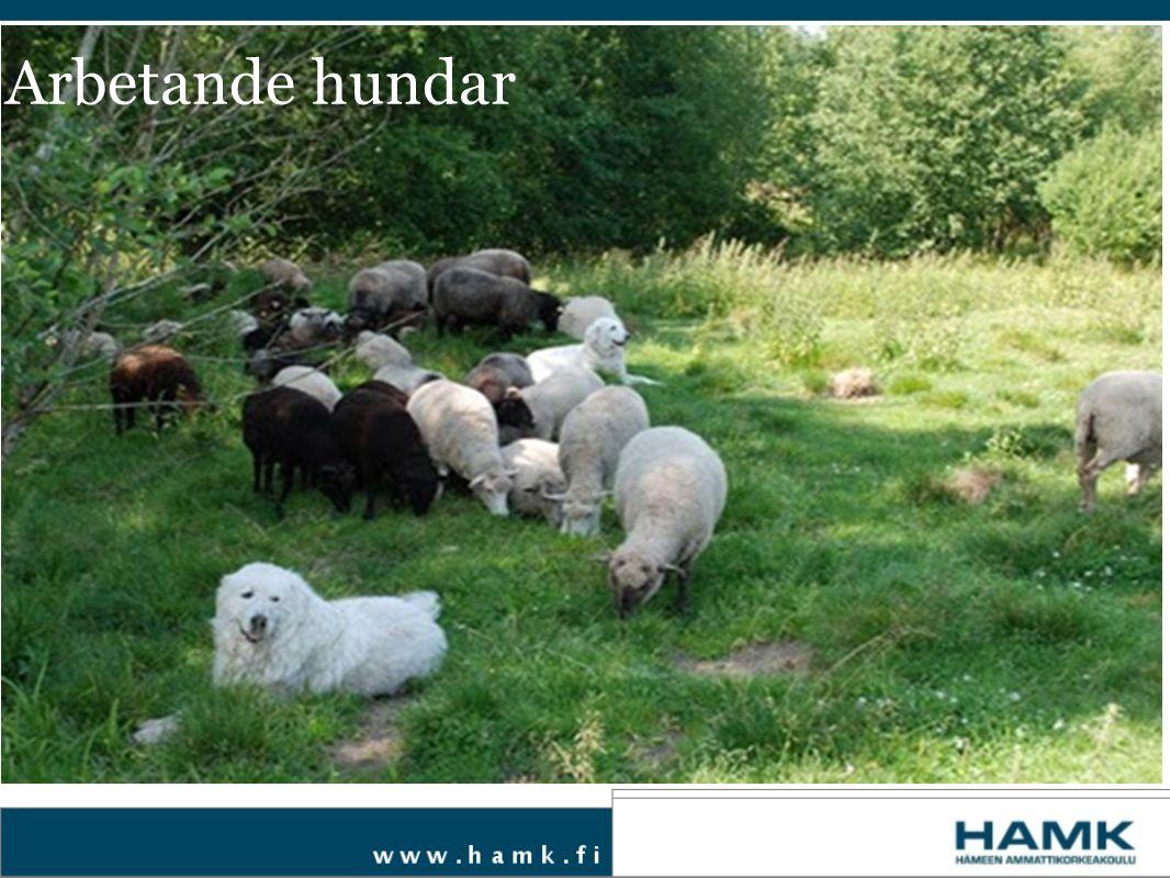 Är du intresserad av att använda en vakthund på din gård.