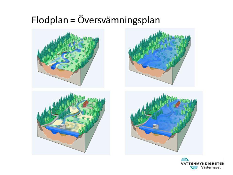 Fårans form i naturliga vattendrag är i balans med hydrologin