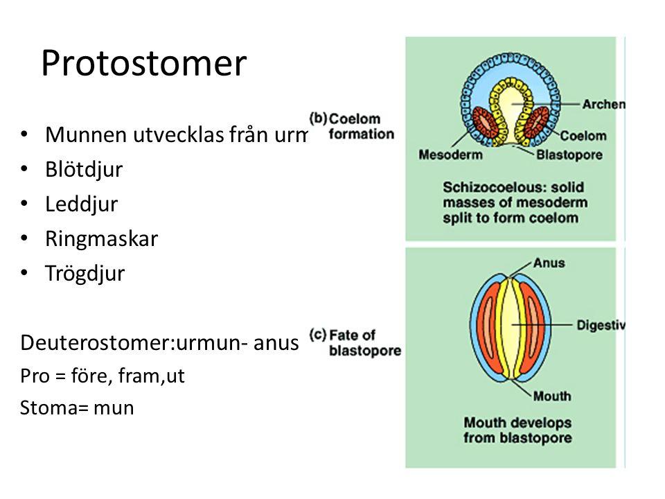 Välutvecklat Nervsystem Sinnesorgan Ögon, hörsel, lukt och känsel