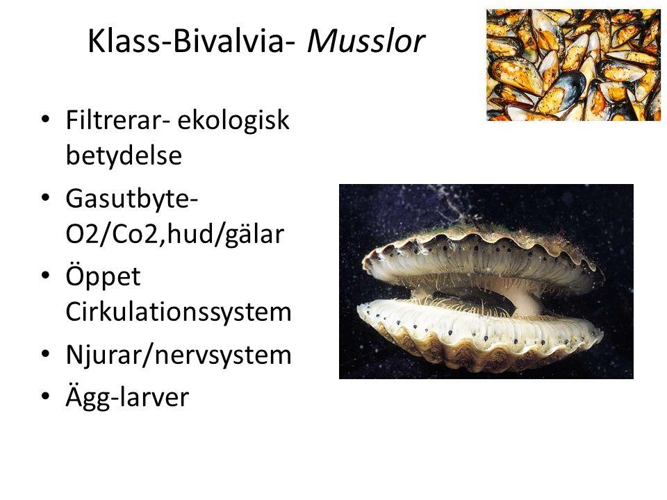 Ordningar för klassen spindeldjur: -Spindlar -Lockespindlar -Skorpioner -kvalster Spindlar (Araneae) Bakkropp inte segmenterad, tydlig midja Rovdjur med giftkörtel Aktiv(springa, hoppa) Passiv (smyga, vänta) Spinnkörtel inne i kropp och spinnvårtor på bakkropp med nät Andas med trakéer/boklungor (hudveck/med lameller (skivor) där gasutbyte sker.
