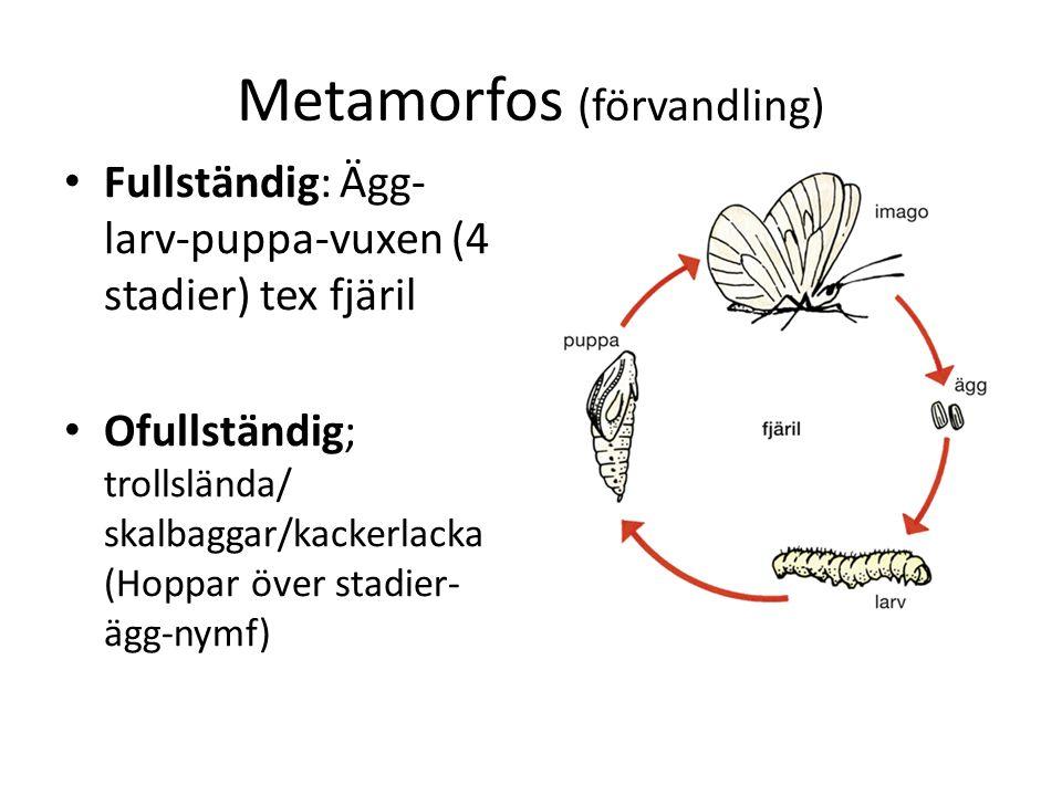 Subfylum Crustacea- kräftdjur 87% marina, 40 % sötvatten, 3% land Huvudelen djurplankton Två par antenner gälar Simben/gångben Huvud och thorax Ett par ben på varje segment skildkönad Öppet blodsystem hemolymfa Kan andas via ben/hud Saltkörtlar med osmotiskt tryck Nervssystem Rörliga ögon, balansorgan, känselhår exoskelett