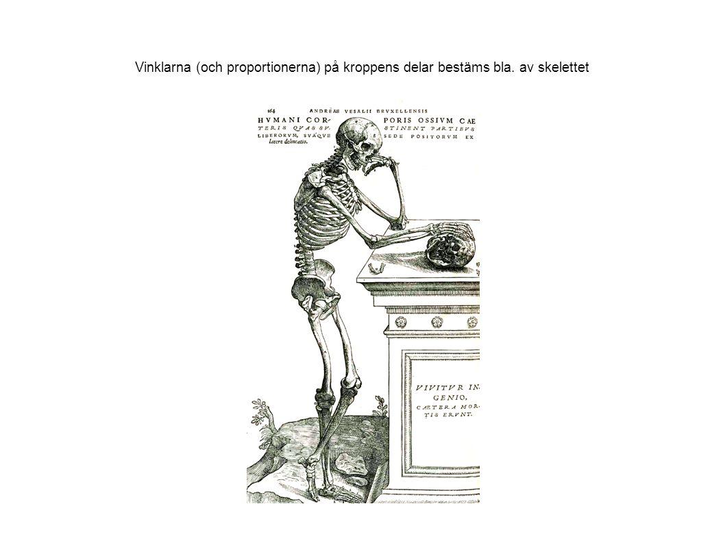 Vinklarna (och proportionerna) på kroppens delar bestäms bla. av skelettet