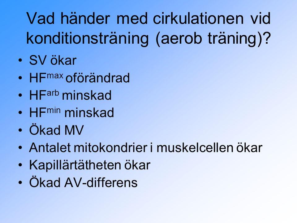 Vad händer med cirkulationen vid konditionsträning (aerob träning).
