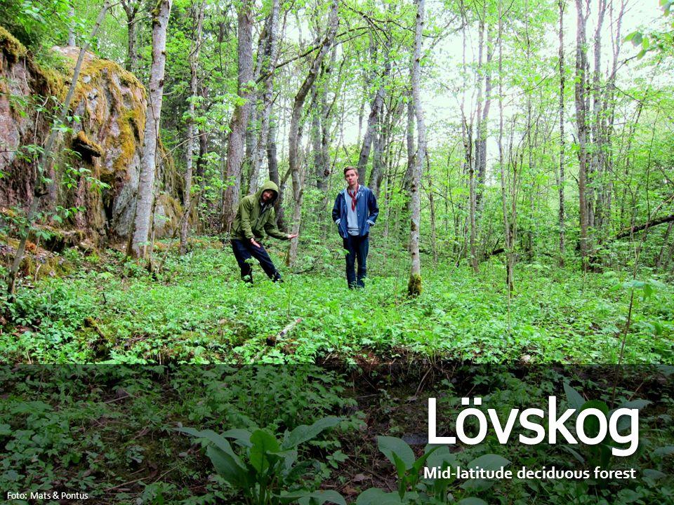Mid-latitude deciduous forest Foto: Mats & Pontus