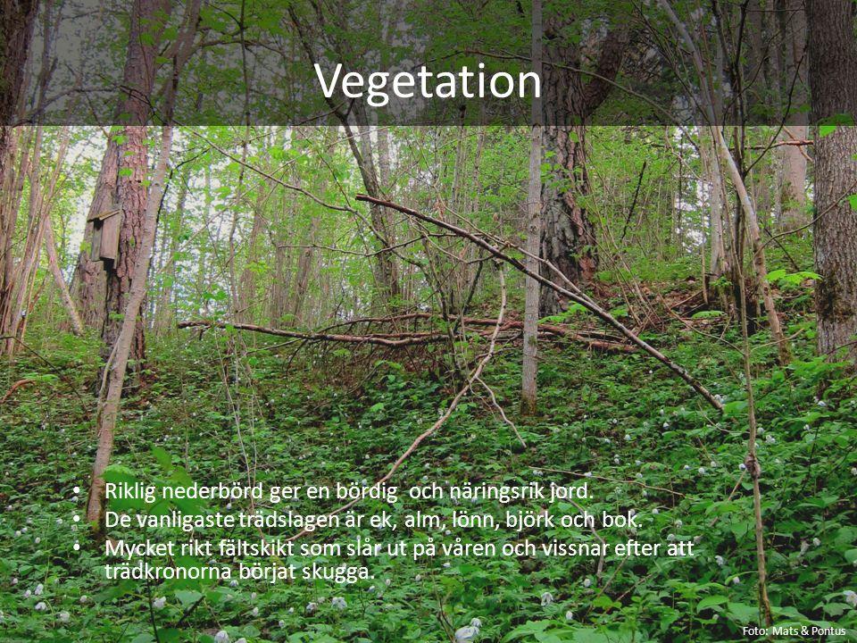 Vegetation Riklig nederbörd ger en bördig och näringsrik jord. De vanligaste trädslagen är ek, alm, lönn, björk och bok. Mycket rikt fältskikt som slå