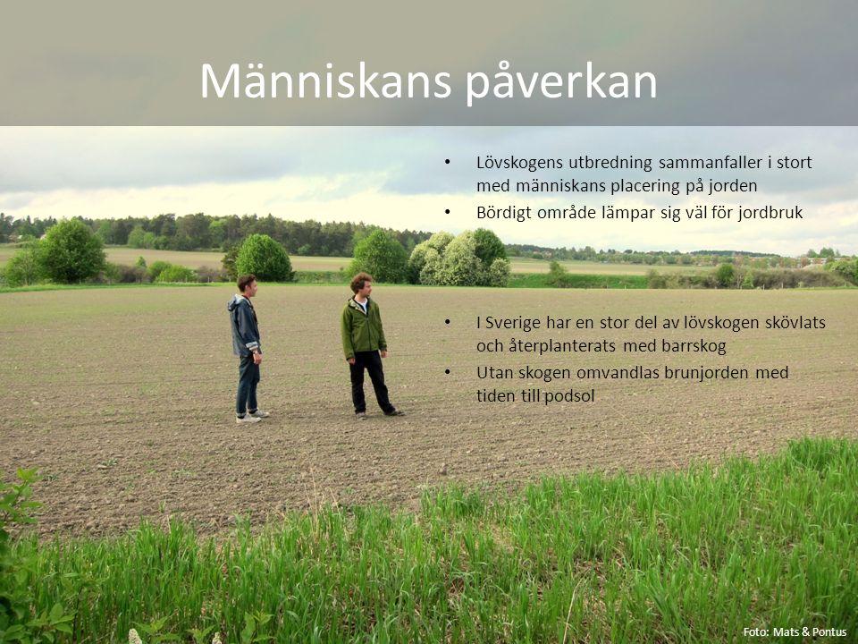 Människans påverkan Lövskogens utbredning sammanfaller i stort med människans placering på jorden Bördigt område lämpar sig väl för jordbruk I Sverige