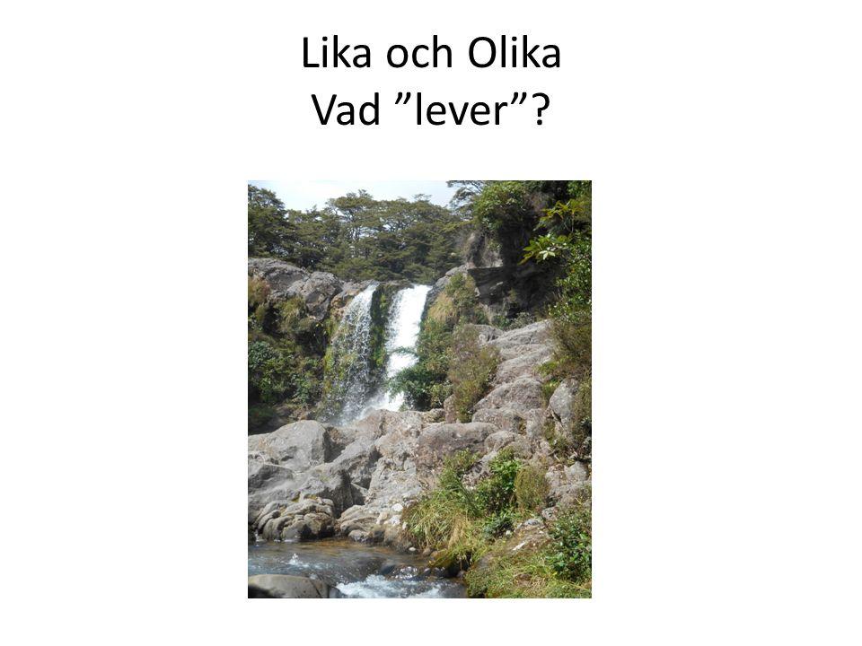 Lika och Olika Vad lever