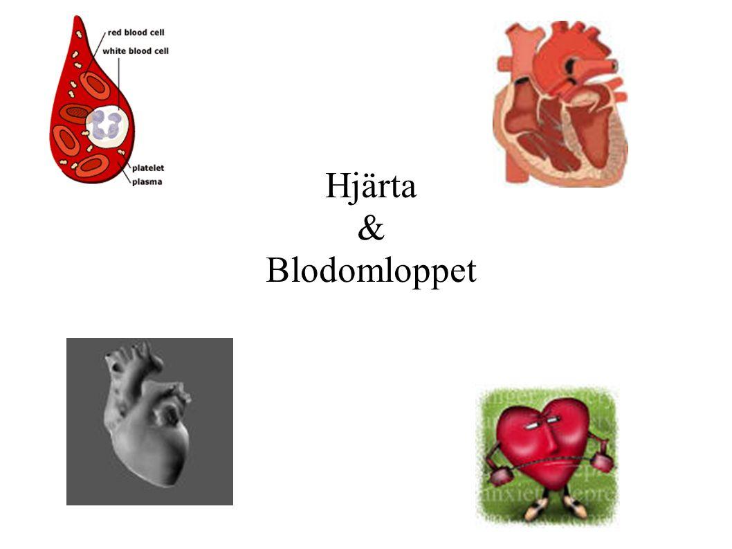 Hjärta & Blodomloppet