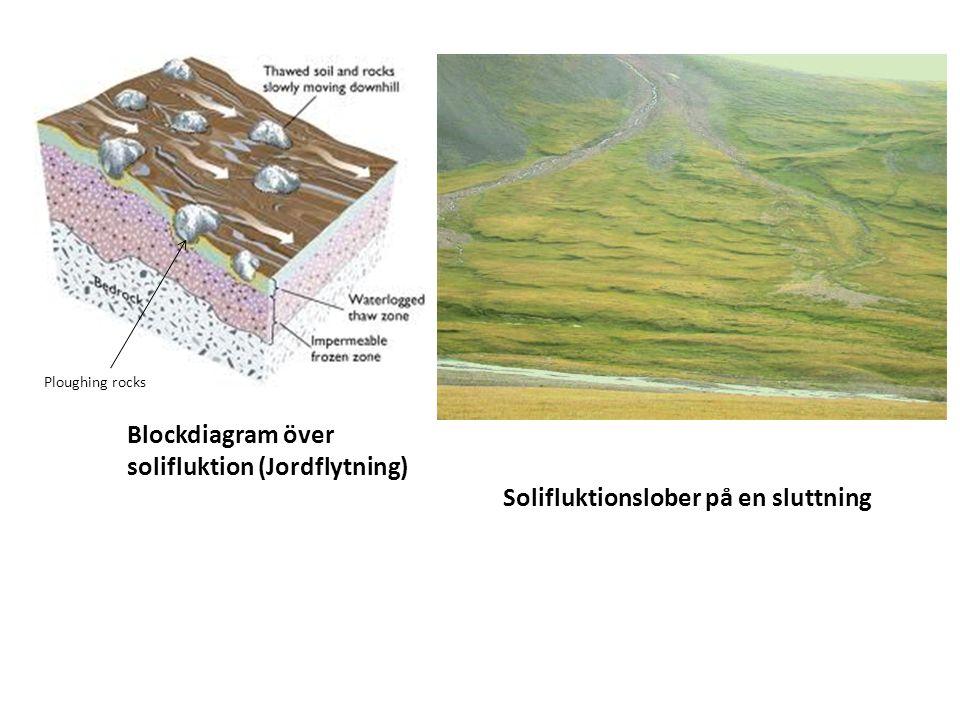Blockdiagram över solifluktion (Jordflytning) Solifluktionslober på en sluttning Ploughing rocks