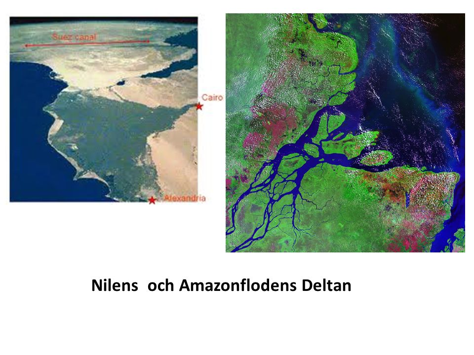 Nilens och Amazonflodens Deltan