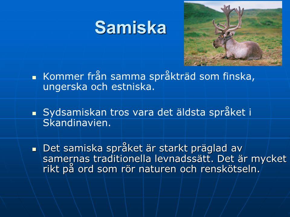 Samiska Kommer från samma språkträd som finska, ungerska och estniska.