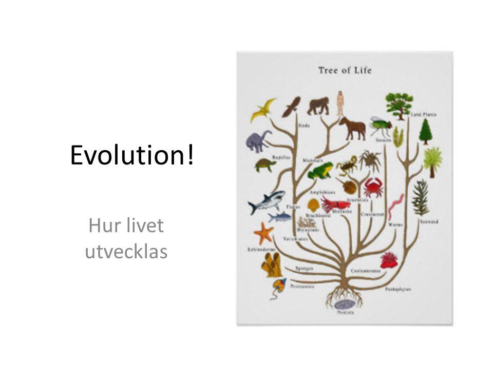 Evolution! Hur livet utvecklas
