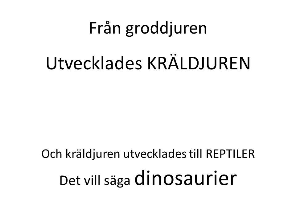 Från groddjuren Utvecklades KRÄLDJUREN Och kräldjuren utvecklades till REPTILER Det vill säga dinosaurier