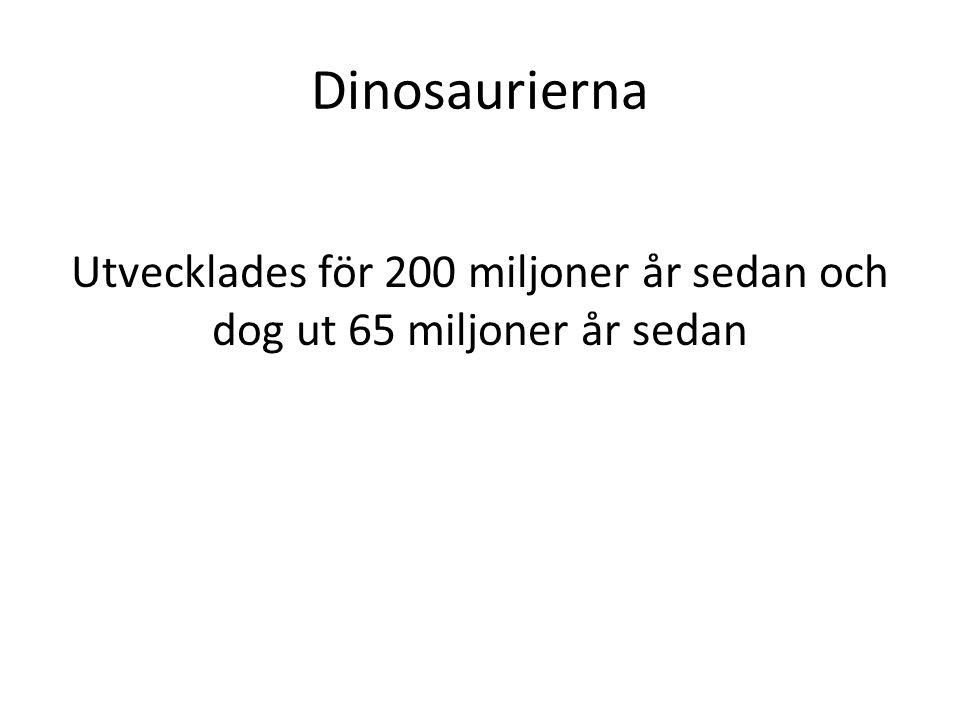 Dinosaurierna Utvecklades för 200 miljoner år sedan och dog ut 65 miljoner år sedan
