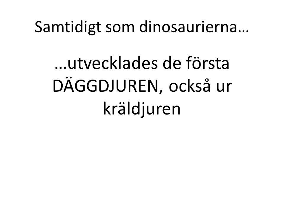 Samtidigt som dinosaurierna… …utvecklades de första DÄGGDJUREN, också ur kräldjuren