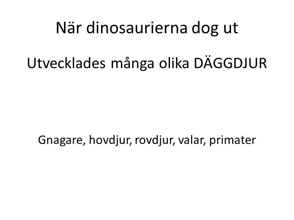När dinosaurierna dog ut Utvecklades många olika DÄGGDJUR Gnagare, hovdjur, rovdjur, valar, primater