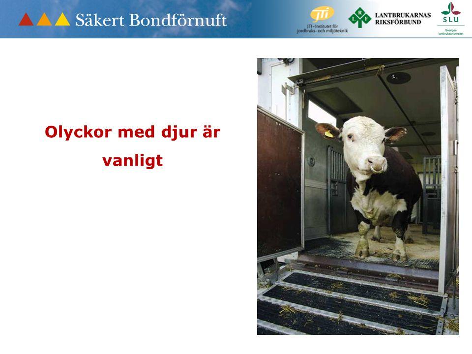 Olyckor med djur är vanligt