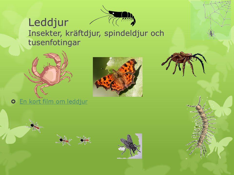 Leddjur Insekter, kräftdjur, spindeldjur och tusenfotingar  En kort film om leddjur En kort film om leddjur
