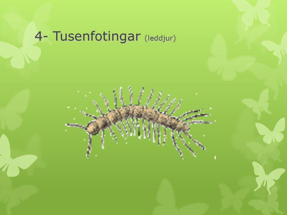 4- Tusenfotingar (leddjur)