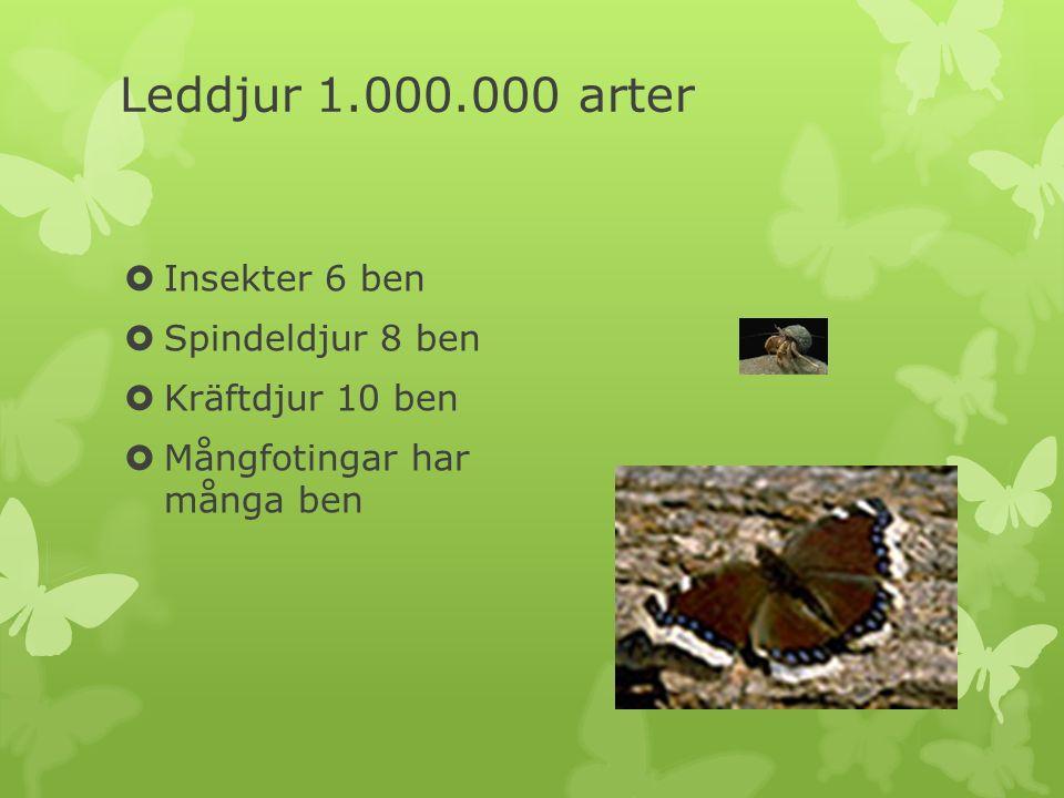 Leddjur 1.000.000 arter  Insekter 6 ben  Spindeldjur 8 ben  Kräftdjur 10 ben  Mångfotingar har många ben