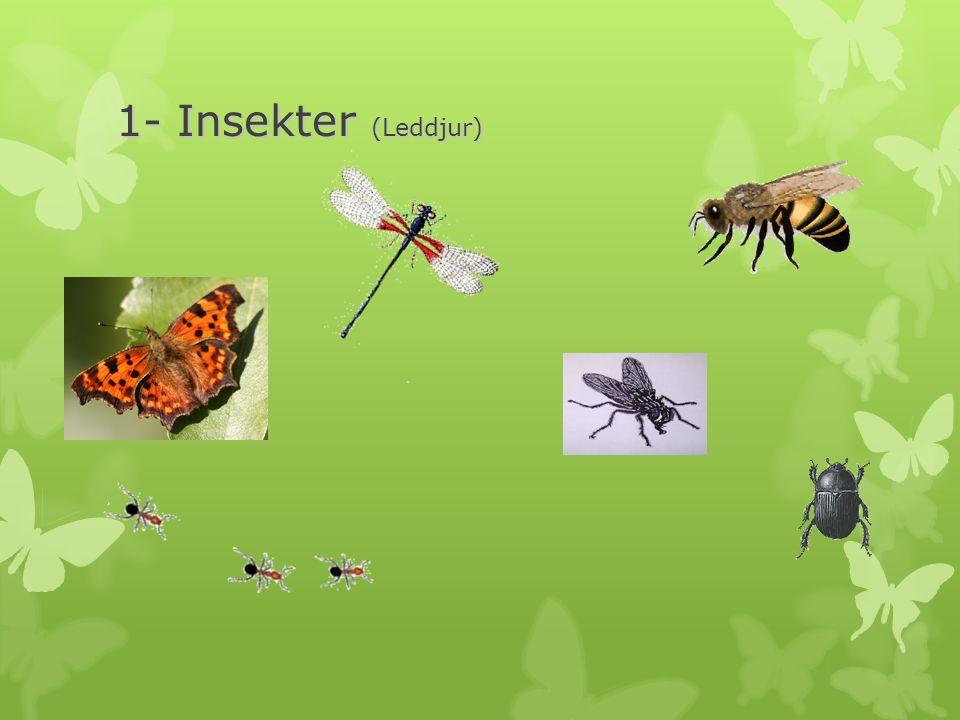 1- Insekter (Leddjur)