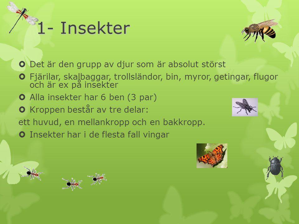 1- Insekter  Det är den grupp av djur som är absolut störst  Fjärilar, skalbaggar, trollsländor, bin, myror, getingar, flugor och är ex på insekter