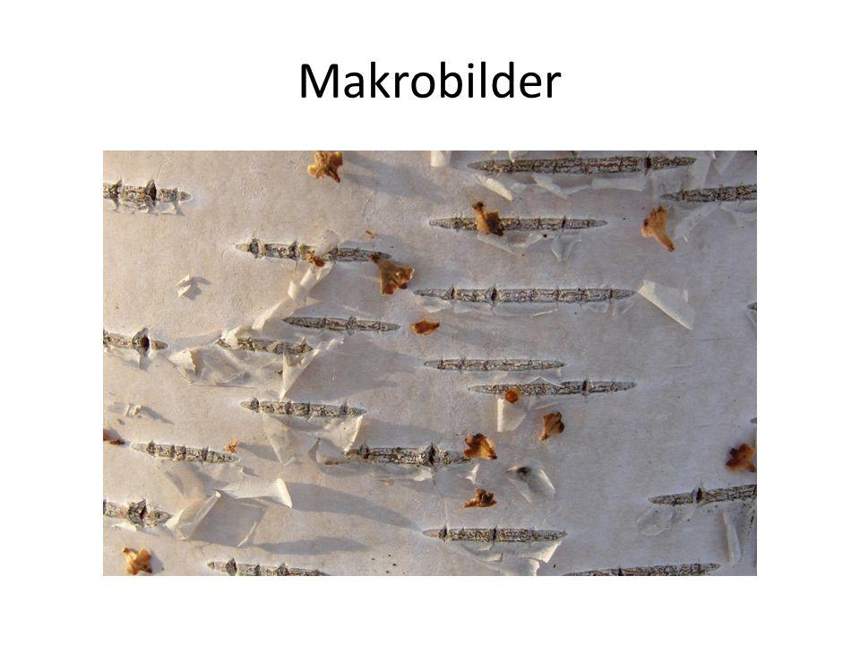 Makrobilder
