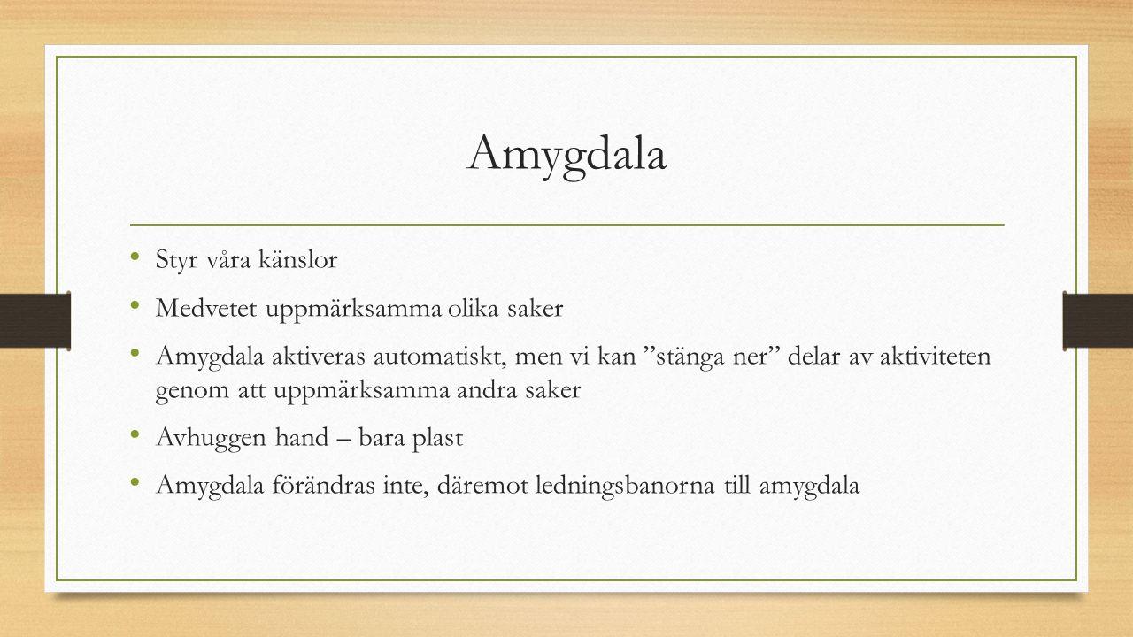 Amygdala Styr våra känslor Medvetet uppmärksamma olika saker Amygdala aktiveras automatiskt, men vi kan stänga ner delar av aktiviteten genom att uppmärksamma andra saker Avhuggen hand – bara plast Amygdala förändras inte, däremot ledningsbanorna till amygdala