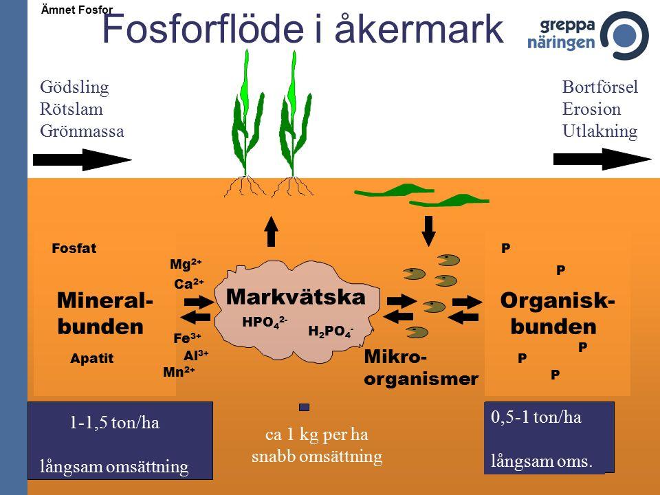 Markvätska H 2 PO 4 - Mineral- bunden Apatit Fosfat Organisk- bunden P P P P P Mikro- organismer Gödsling Rötslam Grönmassa Bortförsel Erosion Utlakning HPO 4 2- Fe 3+ Al 3+ Ca 2+ Mn 2+ Mg 2+ 1-1,5 ton/ha långsam omsättning ca 1 kg per ha snabb omsättning 0,5-1 ton/ha långsam oms.