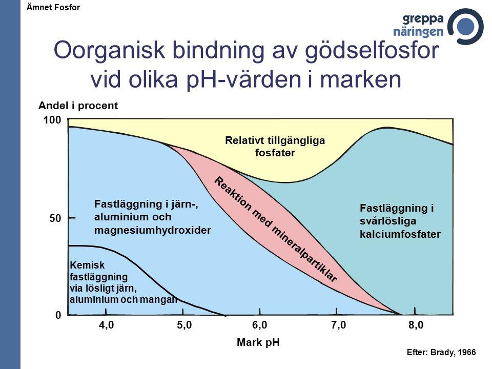 Oorganisk bindning av gödselfosfor vid olika pH-värden i marken Mark pH Andel i procent 4,0 100 50 0 5,06,07,08,0 Fastläggning i järn-, aluminium och magnesiumhydroxider Fastläggning i svårlösliga kalciumfosfater R e a k t i o n m e d m i n e r a l p a r t i k l a r Relativt tillgängliga fosfater Kemisk fastläggning via lösligt järn, aluminium och mangan Efter: Brady, 1966 Ämnet Fosfor