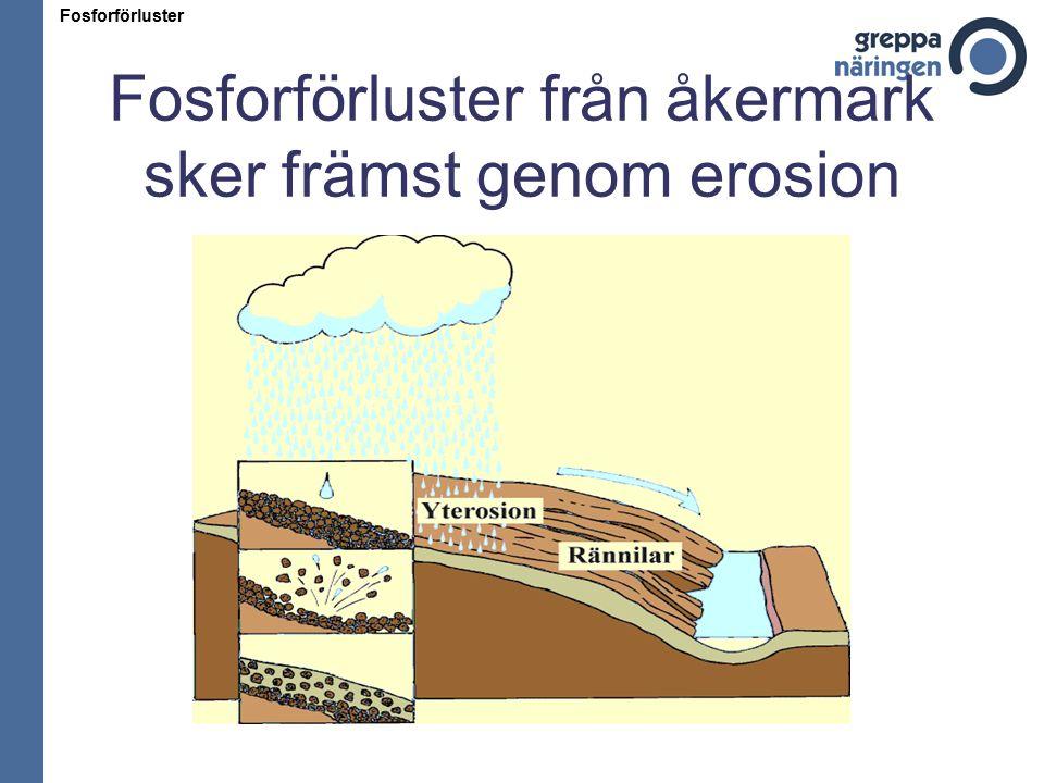 Fosforförluster från åkermark sker främst genom erosion Fosforförluster