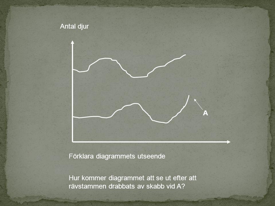 Antal djur A Förklara diagrammets utseende Hur kommer diagrammet att se ut efter att rävstammen drabbats av skabb vid A?