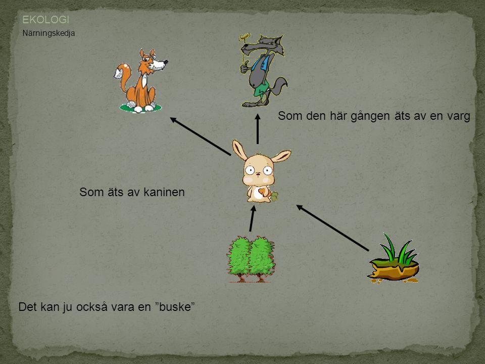 """EKOLOGI Närningskedja Det kan ju också vara en """"buske"""" Som äts av kaninen Som den här gången äts av en varg"""