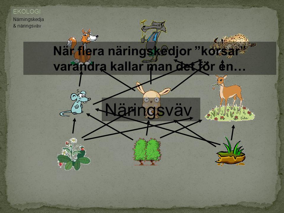 EKOLOGI Närningskedja Producent.Konsument. Toppkonsument.