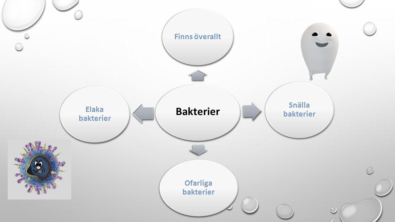 Bakterier Finns överallt Snälla bakterier Ofarliga bakterier Elaka bakterier