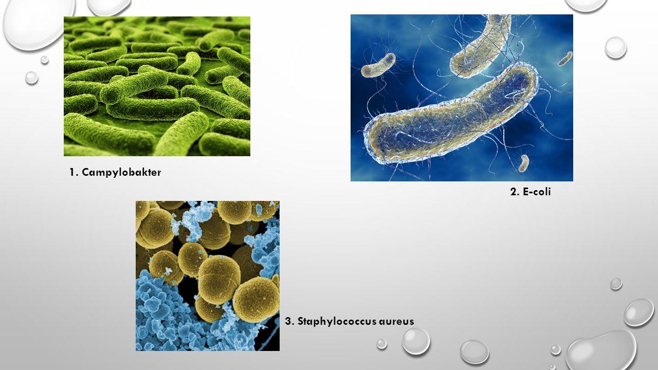 1. Campylobakter 2. E-coli 3. Staphylococcus aureus